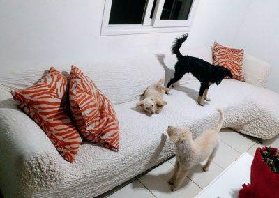 sofa_destaque(2)